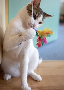 Free cat behaviour courses